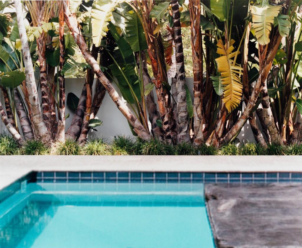 Pool Trees / 2014